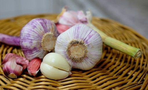 Growing Great Garlic - Garden Workshop
