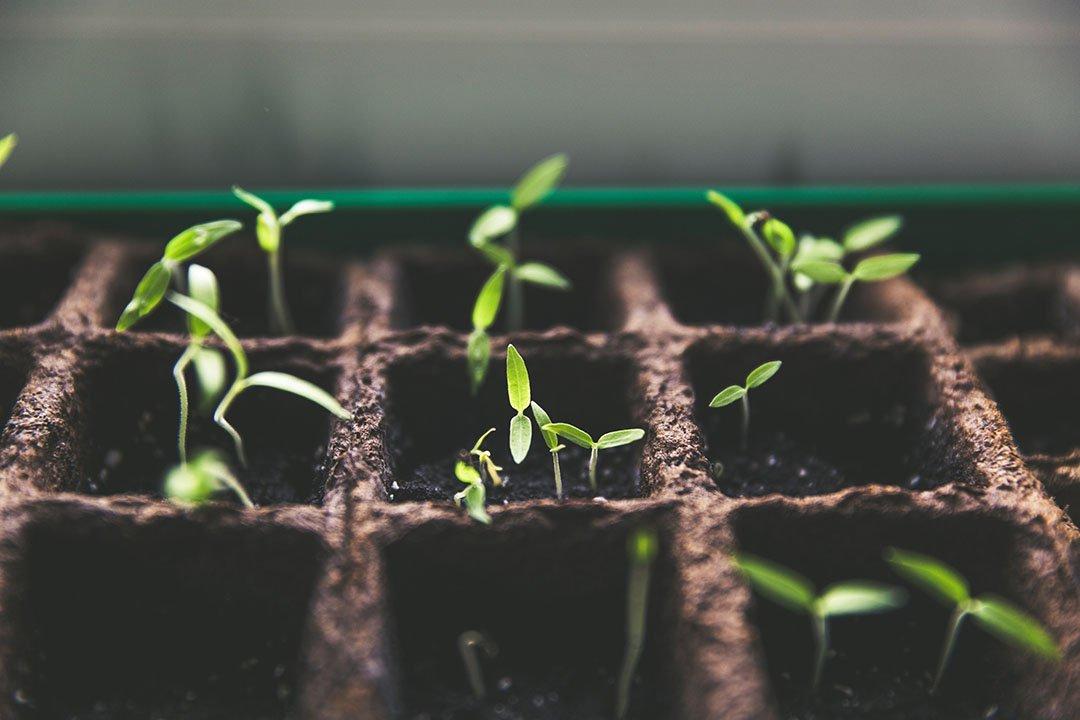 Garden Workshop - Grow Fresh Local Greens